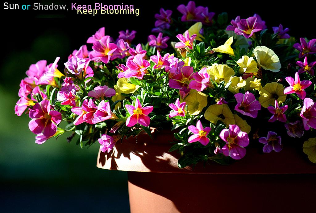 Sun or Shadow, Keep Blooming