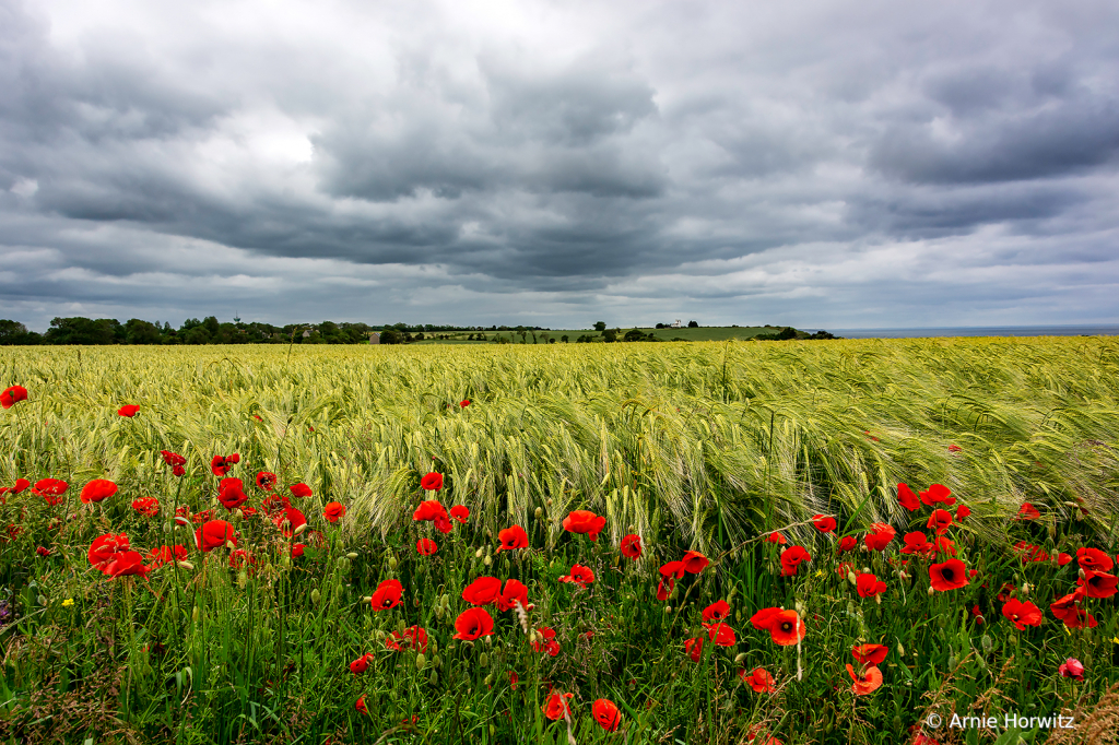 Storm Clouds with Poppies and Wheat Field