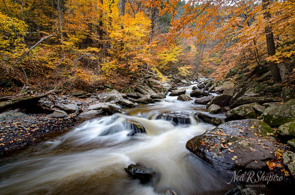Fall Downstream