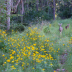 © Cynthia Underhill PhotoID# 15853861: Deer in the Morning IMG_5391