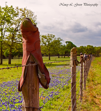 Boots + Blue Bonnets