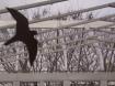 Bird with archite...