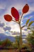 Sunset fruits