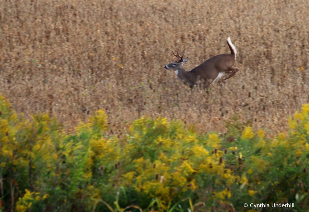 Through The Field IMG_6028 - ID: 15856141 © Cynthia Underhill