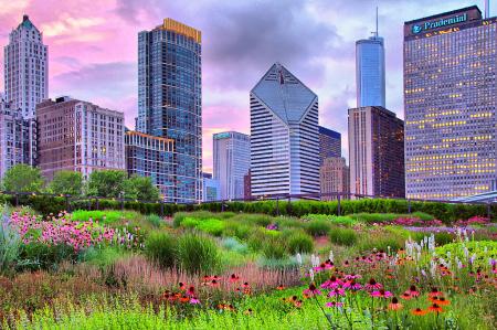 Chicago Summer Garden