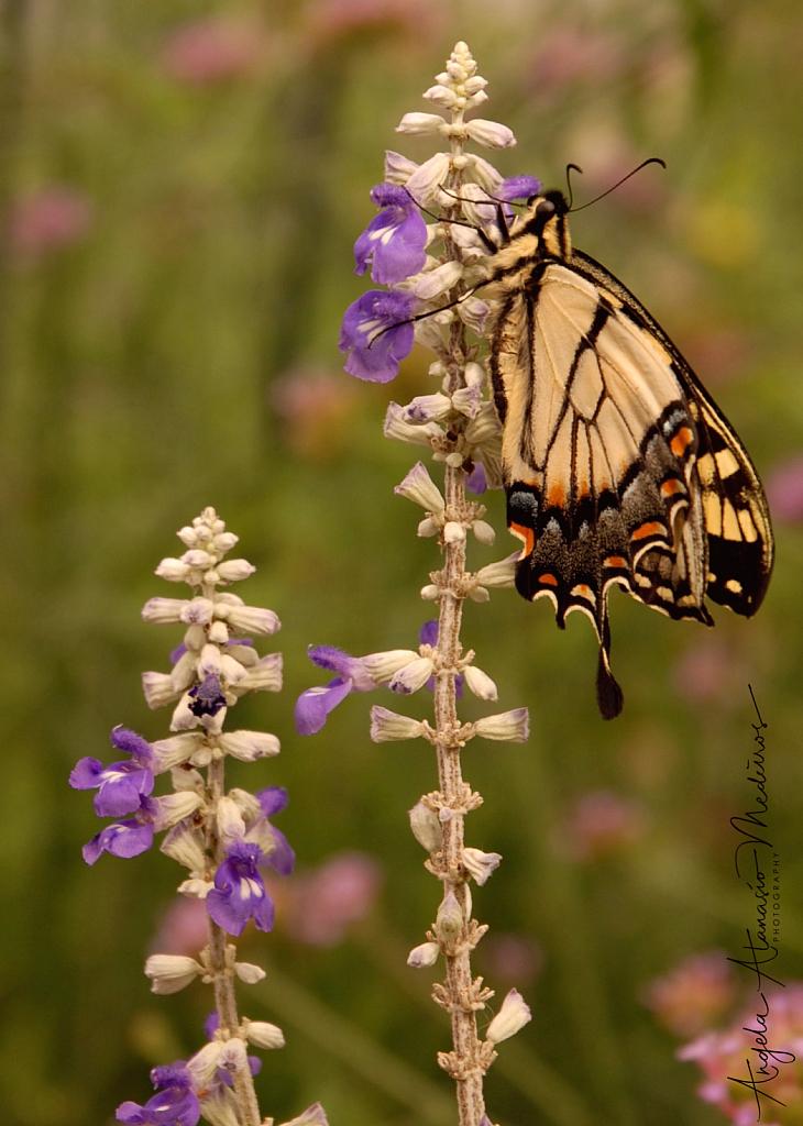 Butterfly Haven - ID: 15855490 © Angela Atanasio-Medeiros