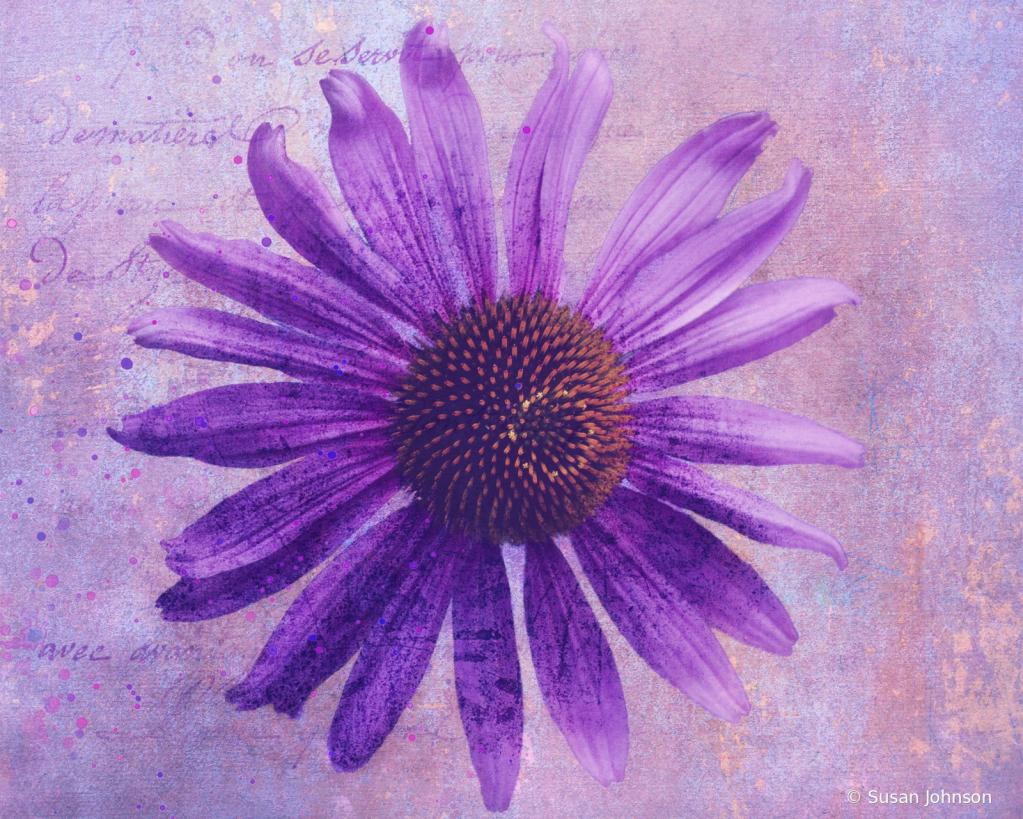 Purple Coneflower - ID: 15858936 © Susan Johnson