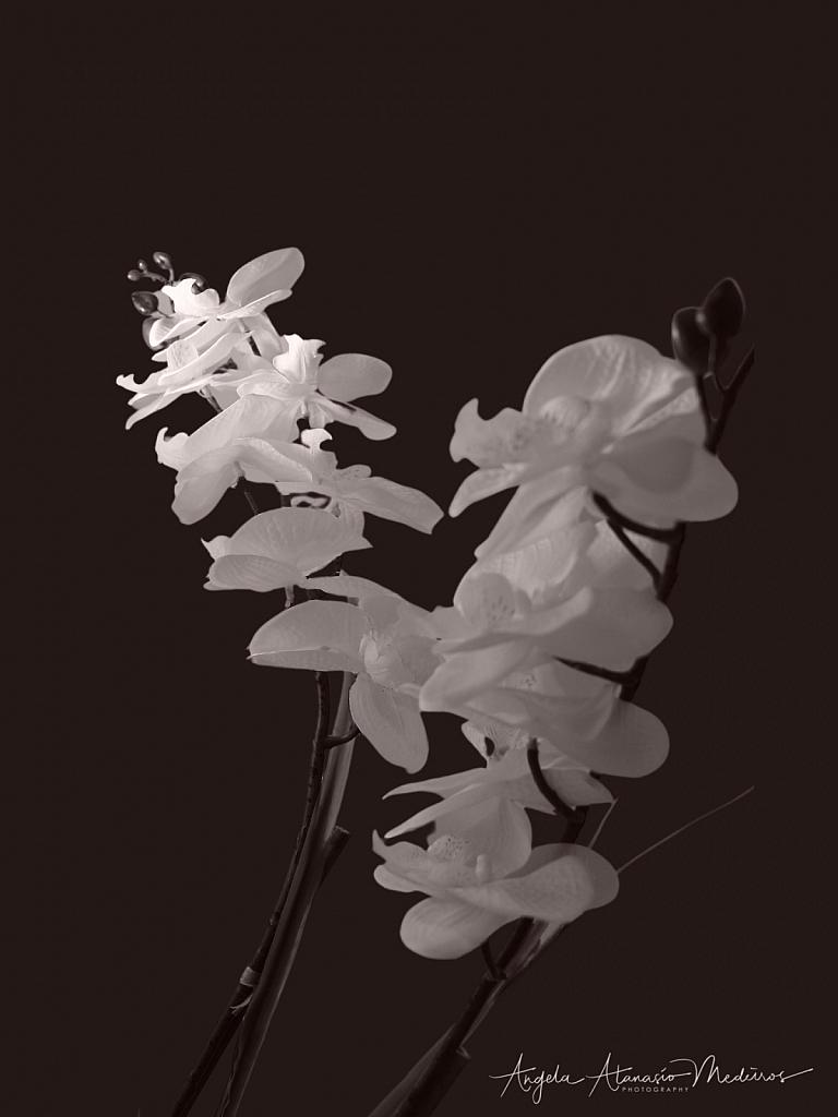 Light Touch Inspired Orchid - ID: 15859196 © Angela Atanasio-Medeiros