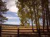 Fencing In Autumn