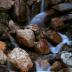 © Paula Hildy PhotoID# 15862987: MountainRockGarden