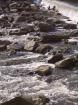 Rough Dam