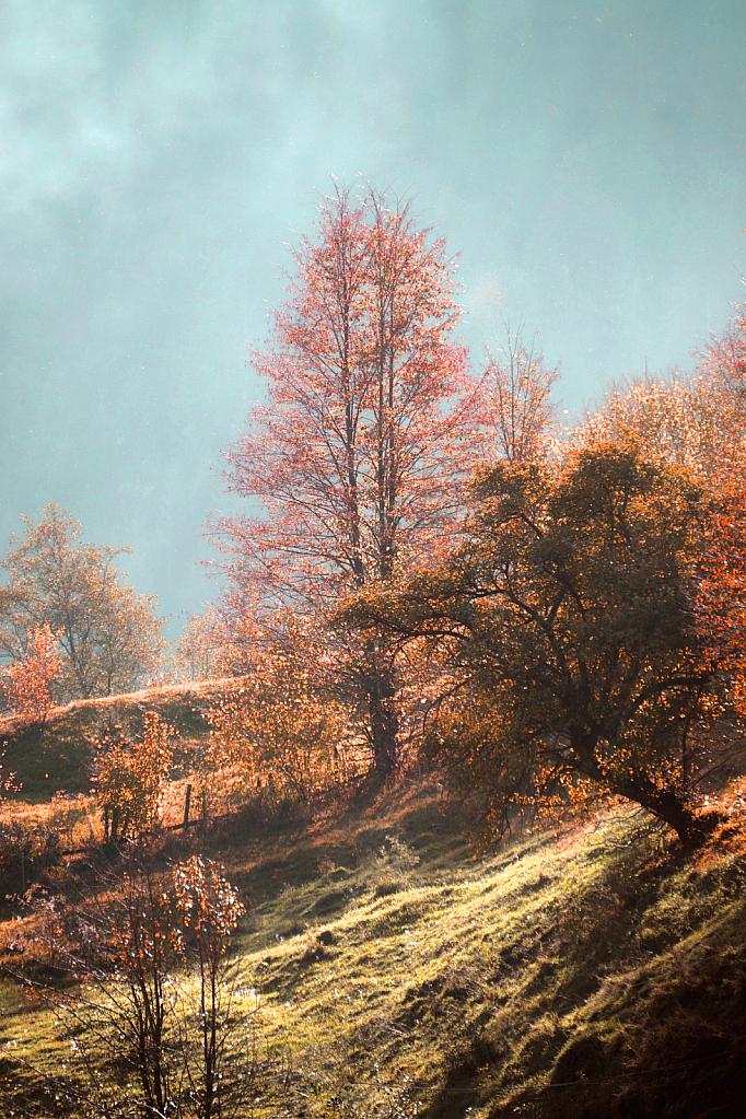 Reaching autumn