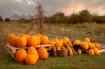 Pumpkins at Lilyc...