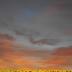 © Theresa Marie Jones PhotoID # 15864115: Sunset on Sun Flowers