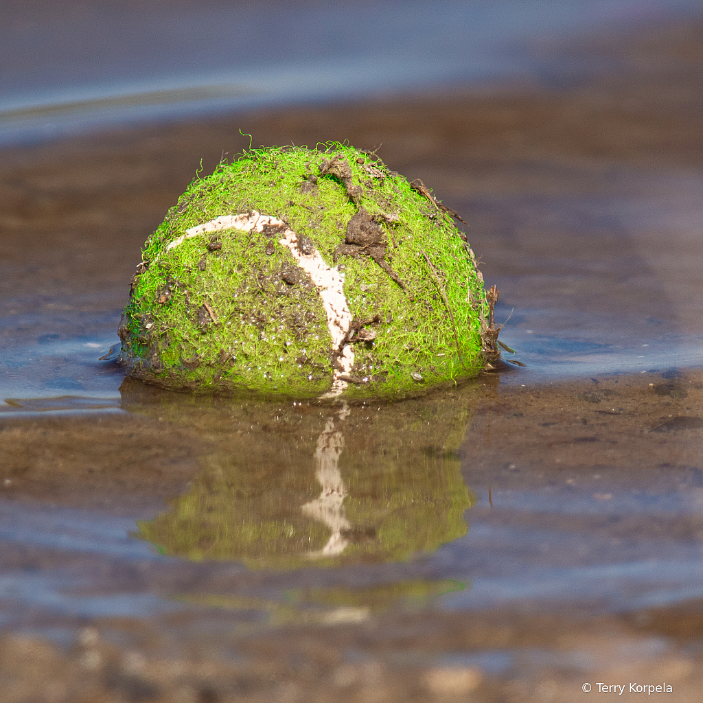 This Tennis Ball is Missing its Dog!