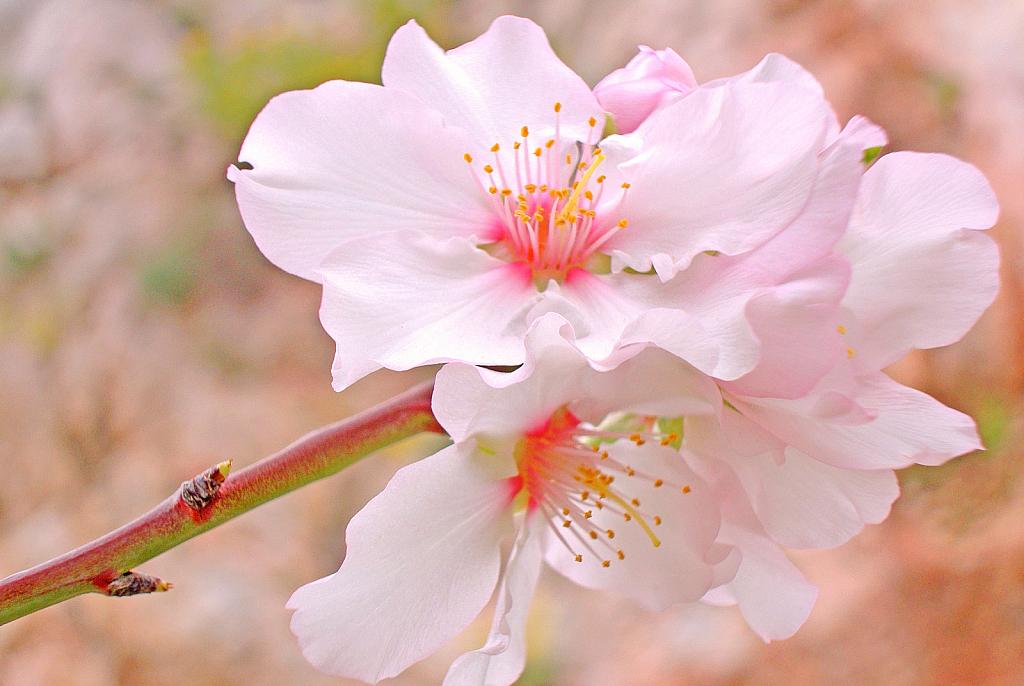 A delicate Beauty. - ID: 15867034 © Elias A. Tyligadas