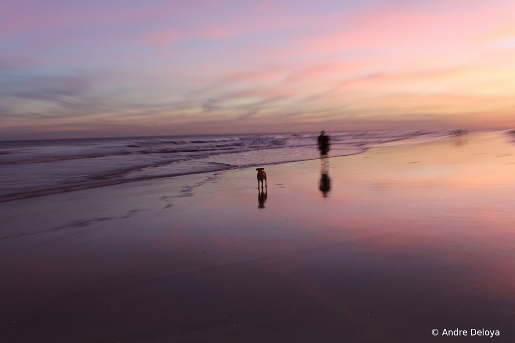 Walking the dog at sunset.