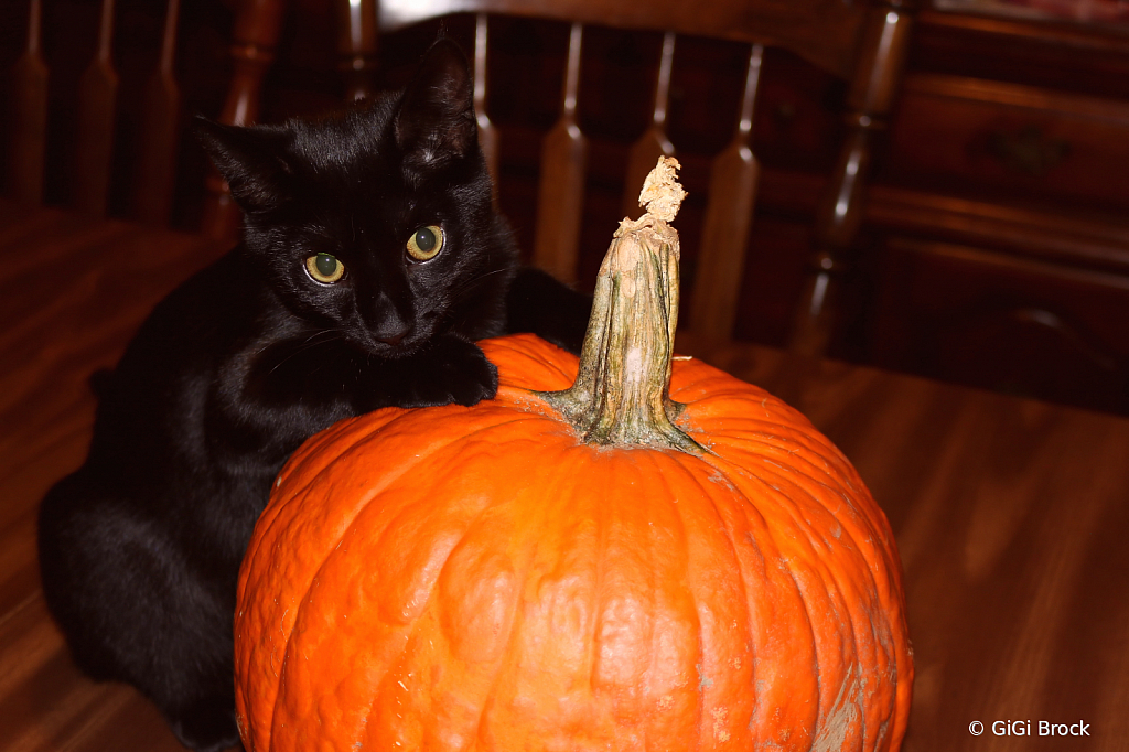 I Love My Pumpkin