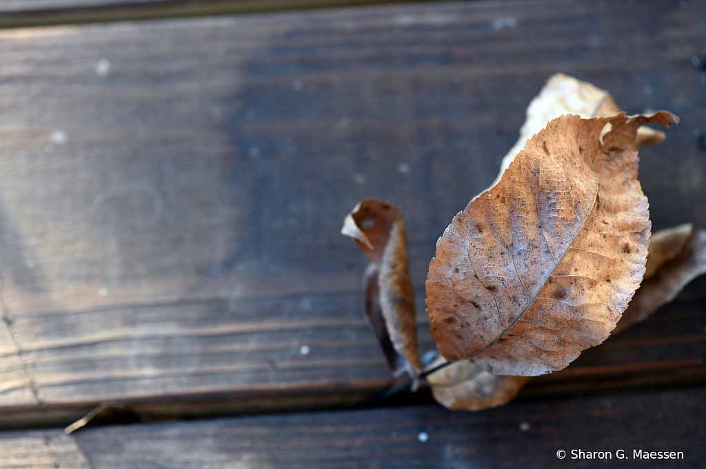 the final fall - ID: 15870280 © Sharon G. Maessen