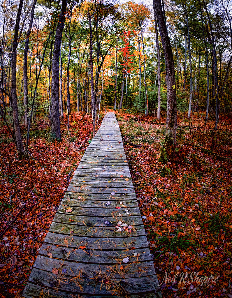 Paths of Fall