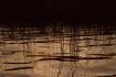 Lake Reeds at dus...