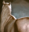 My Horse, My Ther...