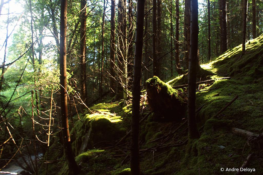 Mossy Knoll in Norwegian Woods..