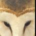© Mary T. Lebrato PhotoID# 15872865: Barn Owl