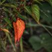 Weed Leaves