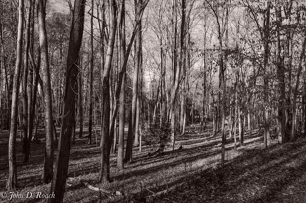 Long Shadows in the Forest