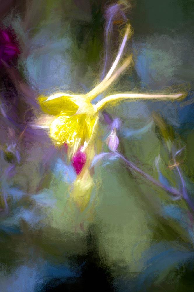 Floral Dreams - ID: 15876157 © Paul Coco