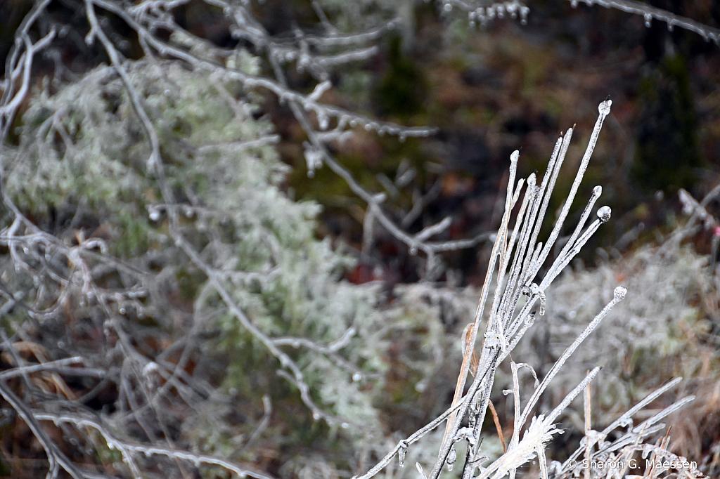 Icy Cold - ID: 15879097 © Sharon G. Maessen