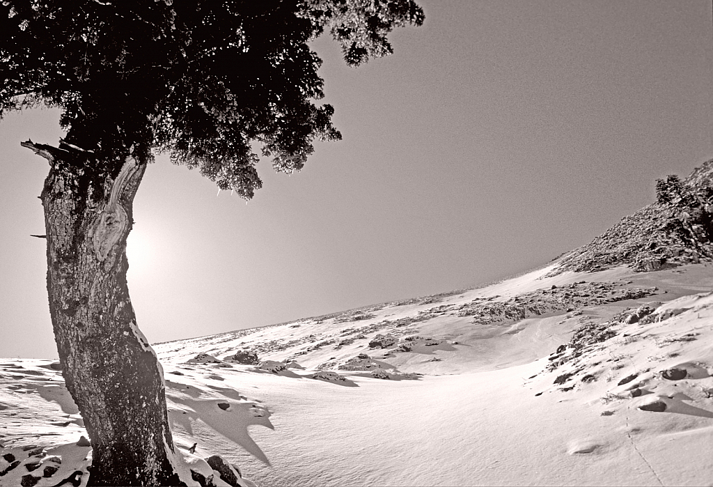 Single tree on the ridge.