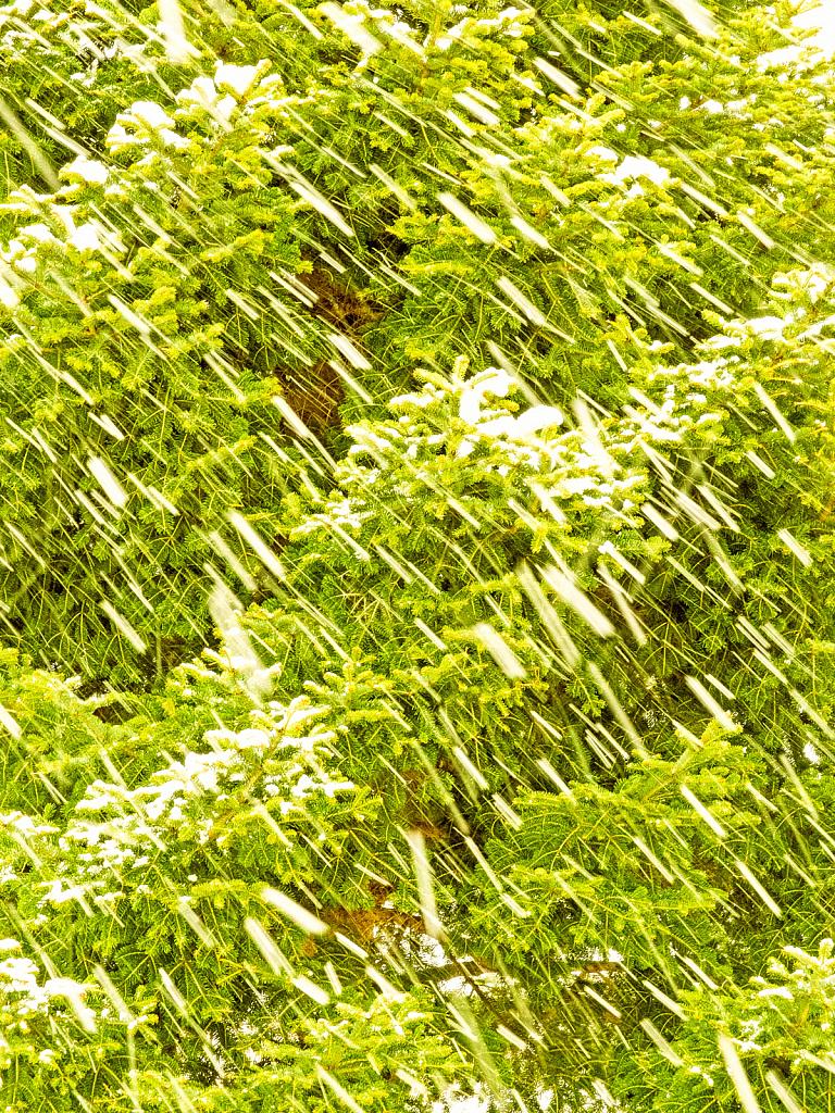 Snow falling fast! - ID: 15879827 © Elias A. Tyligadas