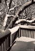 New snow on My ba...