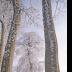 © Elias A. Tyligadas PhotoID# 15881269: White tree in frame.