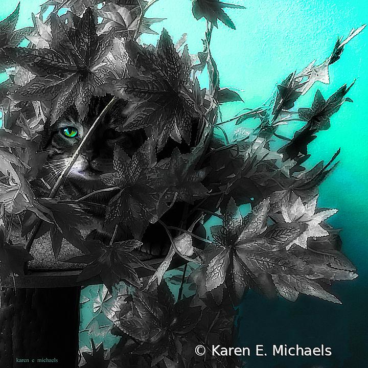 cat tree - ID: 15881595 © Karen E. Michaels