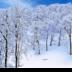 © Elias A. Tyligadas PhotoID# 15881909: Deep in the Snowy Forest.