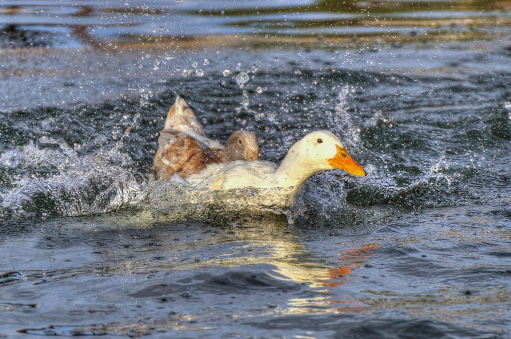 Splish Splash - ID: 15882257 © Sheila Faryna