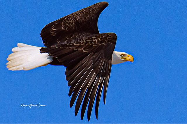 Our National Symbol - Majestic Eagle! 2