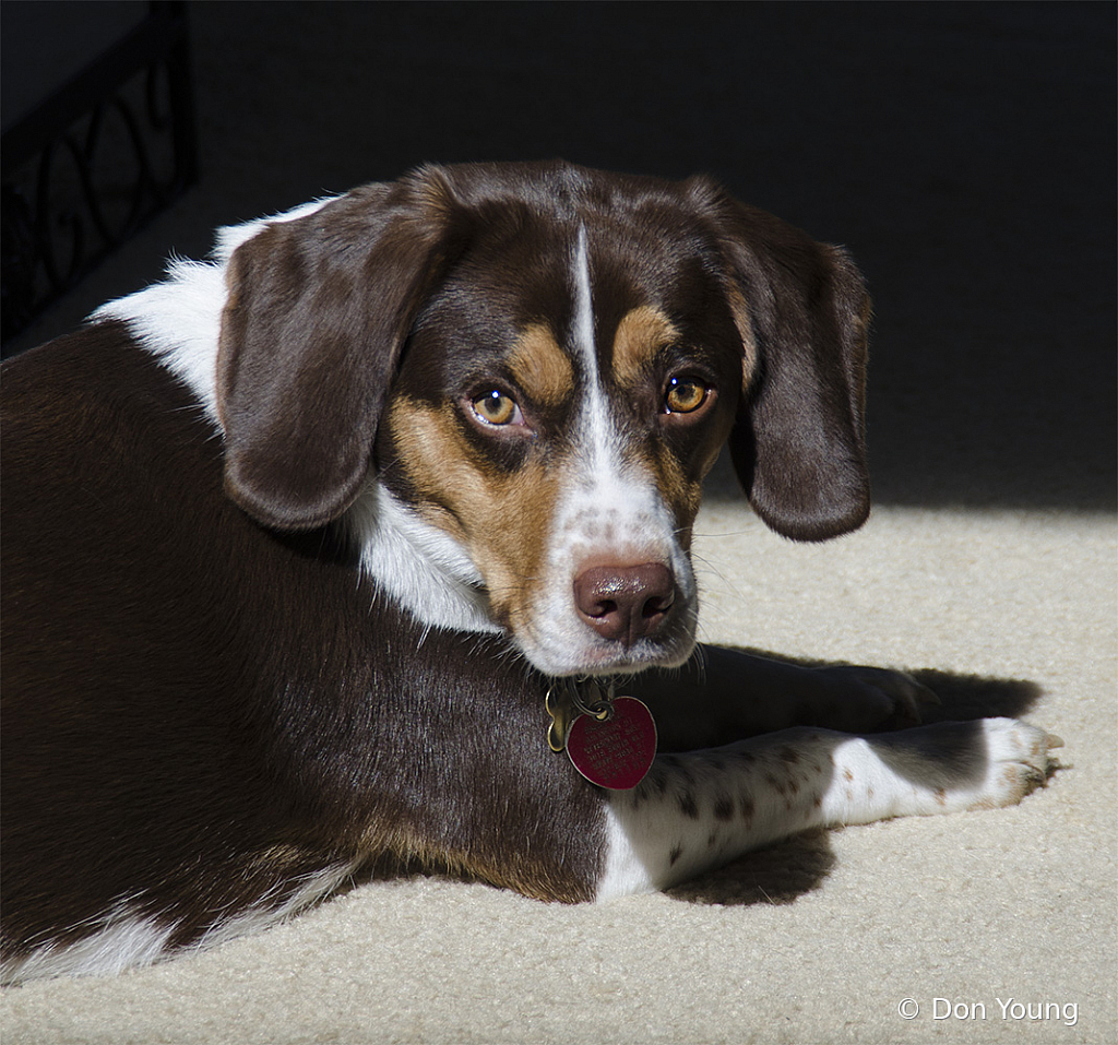 Riley Working On His Tan - ID: 15883897 © Don Young