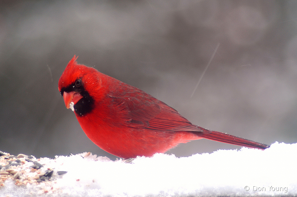 Hungry Bird - ID: 15884069 © Don Young