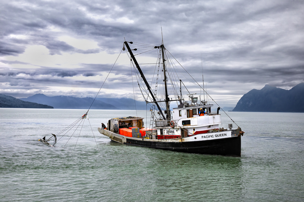Pacific Queen Shrimper