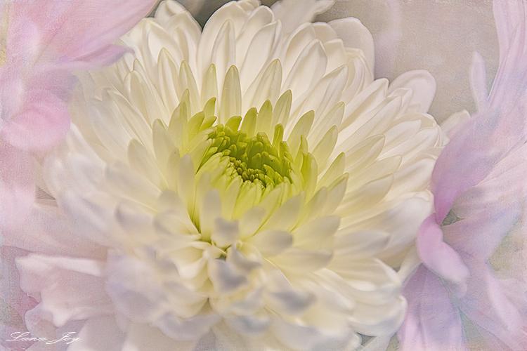 Lana's Valentine flowers - ID: 15885222 © Bruce E. Van-Buskirk