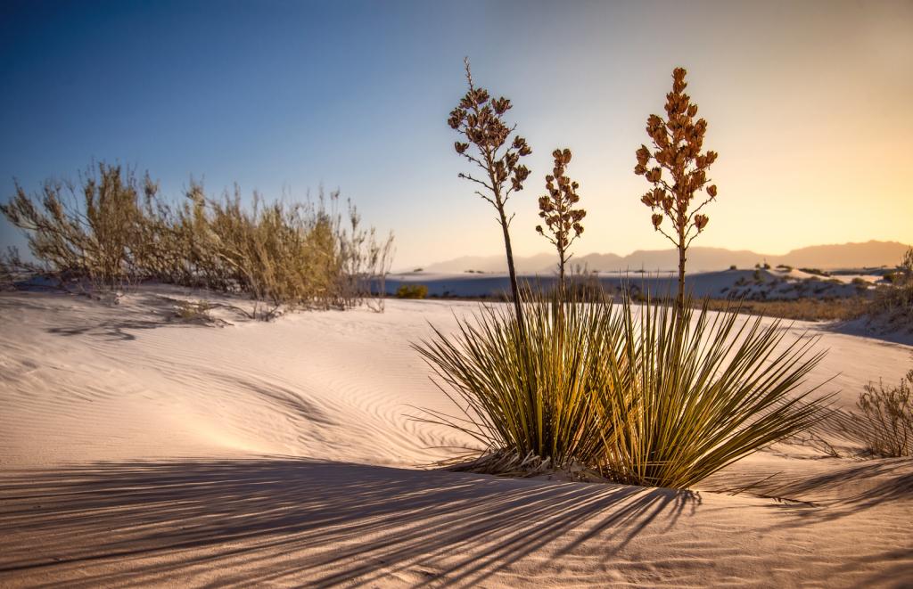 Sunset at White Sands - ID: 15886388 © Richard M. Waas