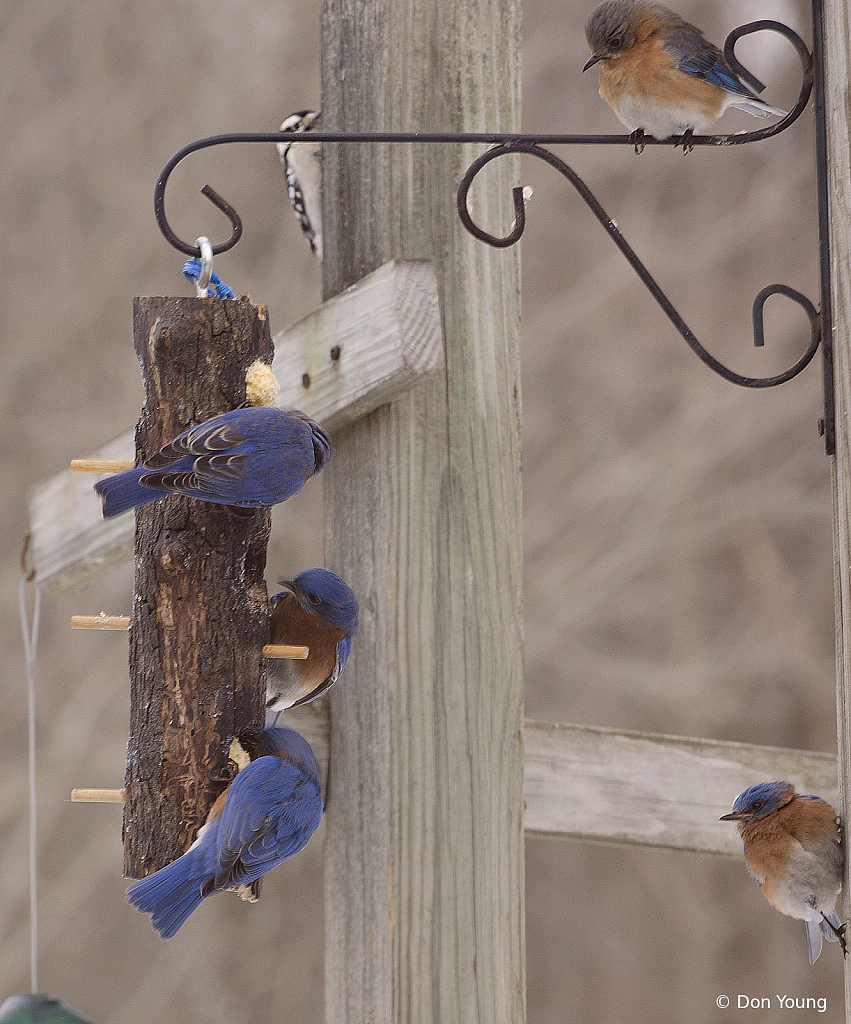 Lunch Time - ID: 15886396 © Don Young