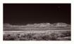 Moon over Rooseve...