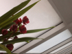 Orchid and archit...