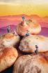 Bread hike