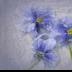 2Pansies  in Ice - ID: 15889679 © Carol Eade